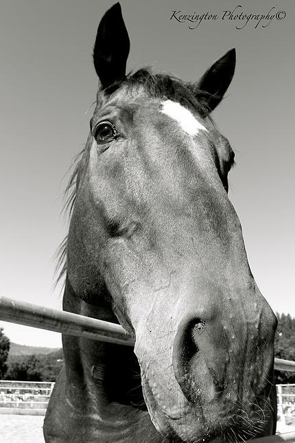 horses55.jpg