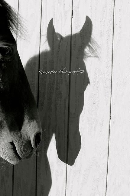 horses51.jpg