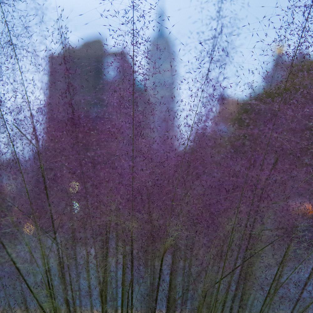 urbanlandscape (12 of 1).jpg