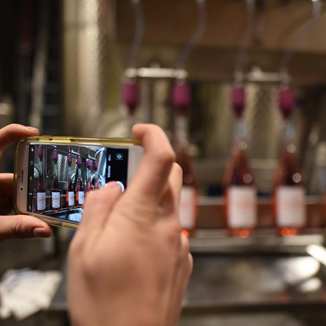 Our Grand Valley Rosé is so pretty, everyone is taking pictures. This wine is just off the bottling line and will be released soon to our Club Carboy Case Club members.
