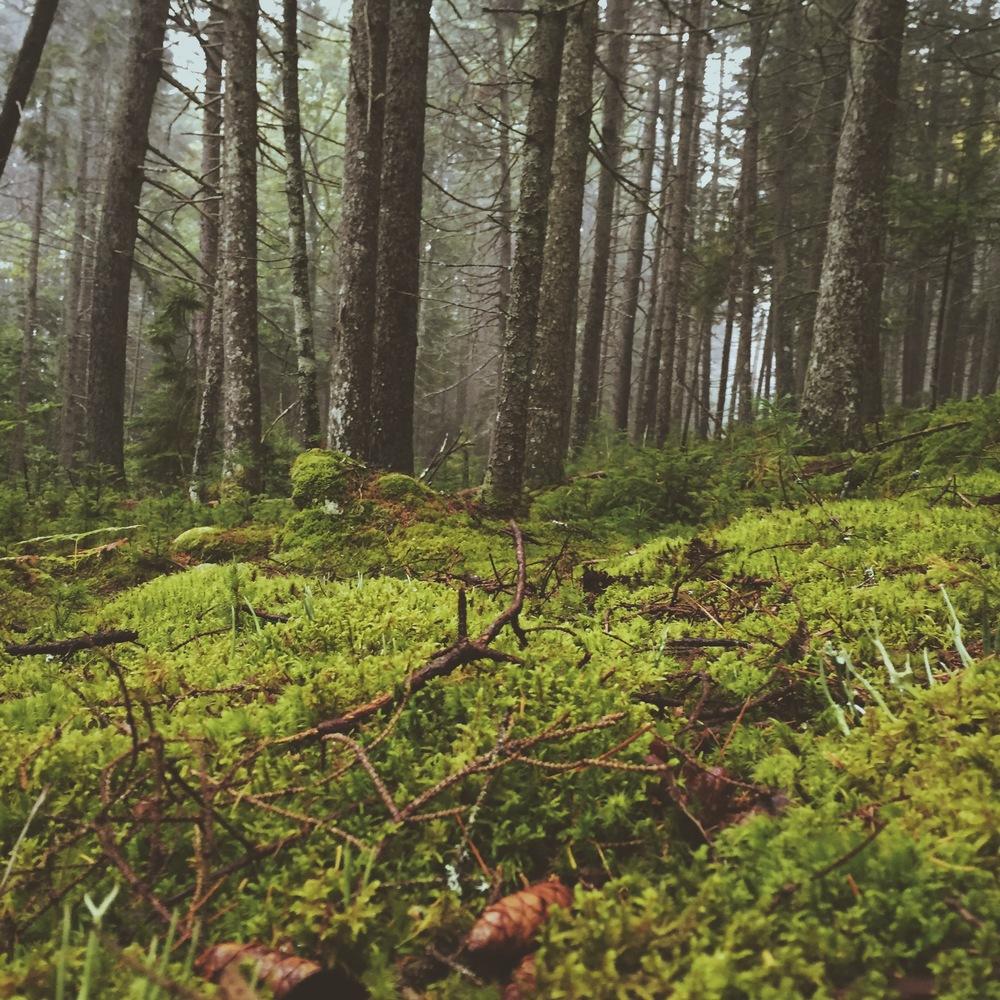 Secret Woods, Cliff Kuhn-Lloyd