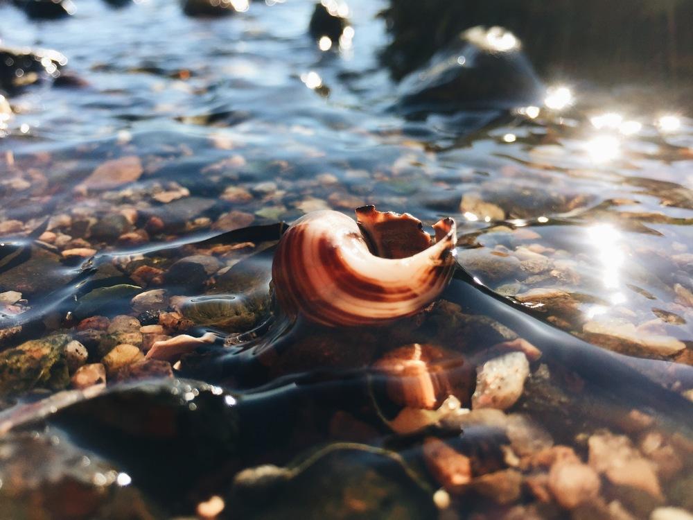 Reaching Light Snail, Cliff Kuhn-Lloyd