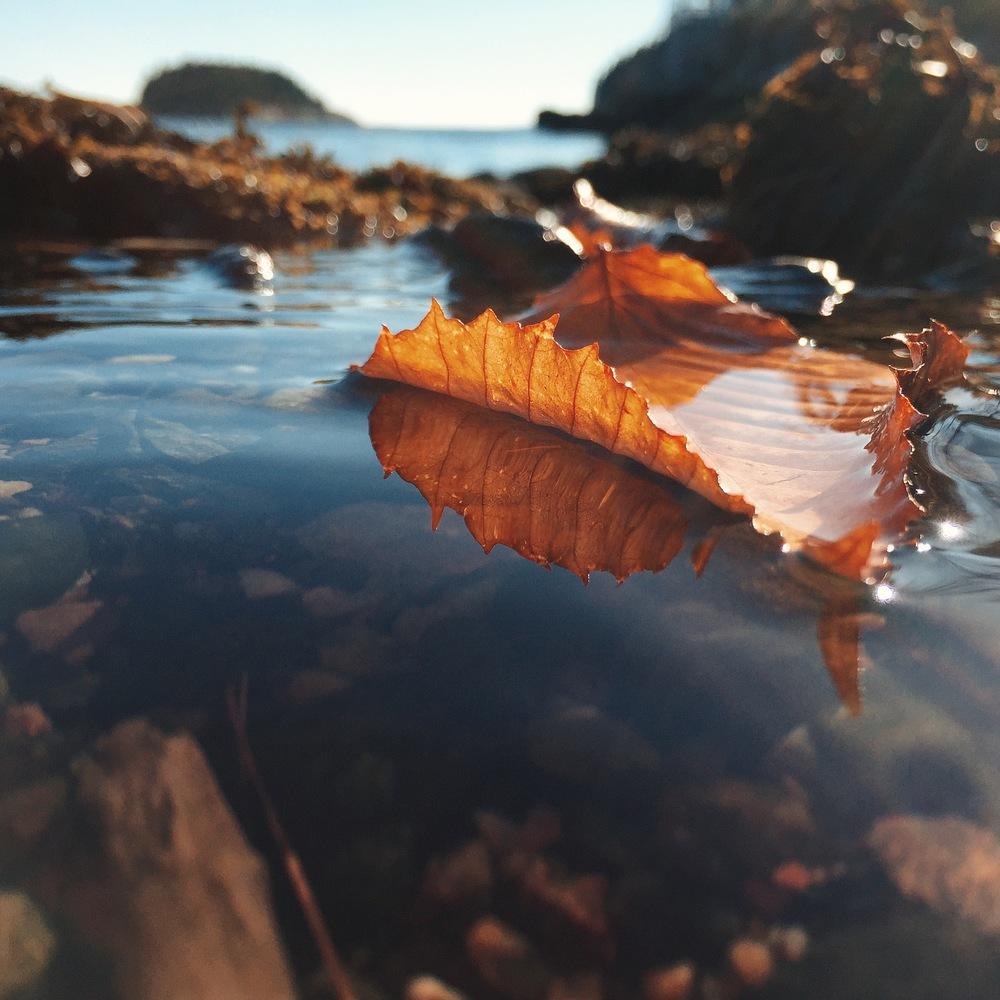 Autumn Island, Cliff Kuhn-Lloyd