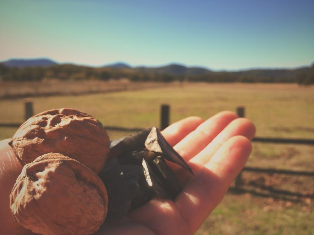Walnuts & Obsidian, Cliff Kuhn-Lloyd