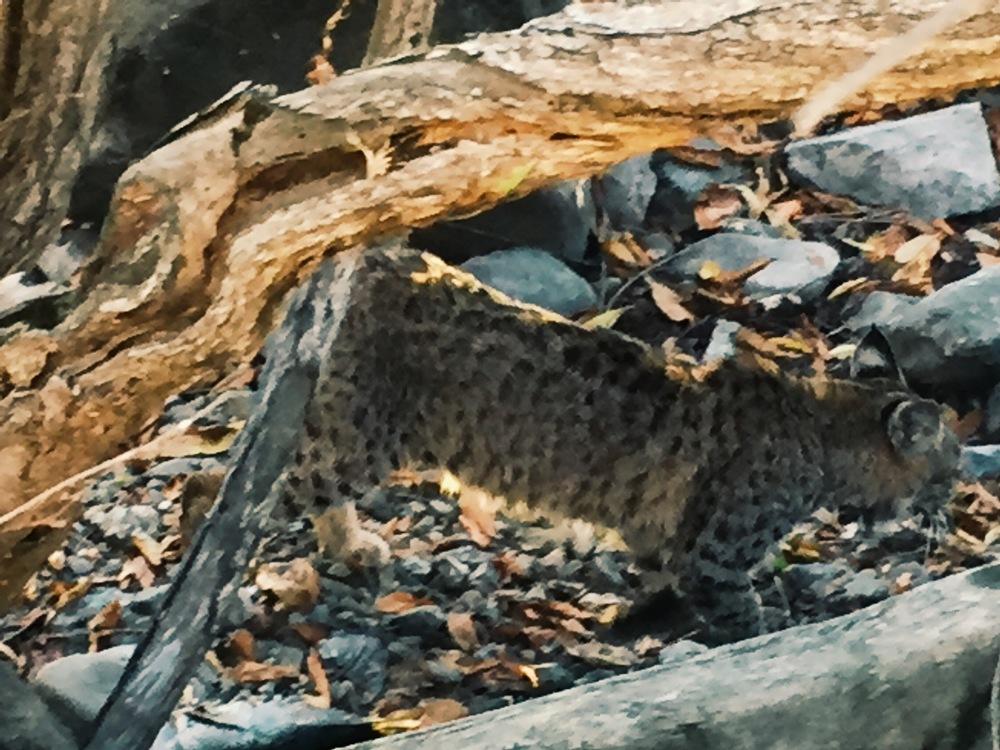 Bobcat -Different World, Cliff Kuhn-Lloyd