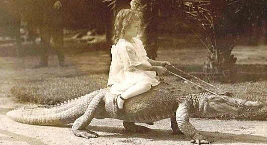 1920s-girl-riding-an-alligator-9452-1254381428-33.jpg