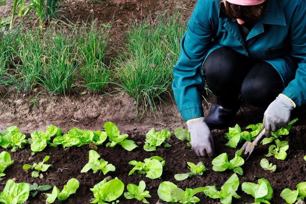 IMG_Person Gardening.jpg