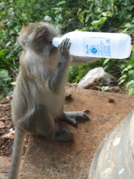 Sharing water with a monkey in Thailand