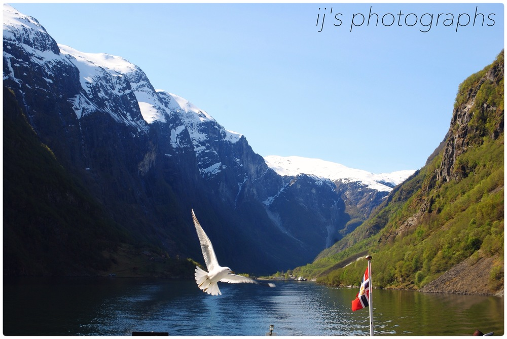 norwegian fjord with bird (2014)