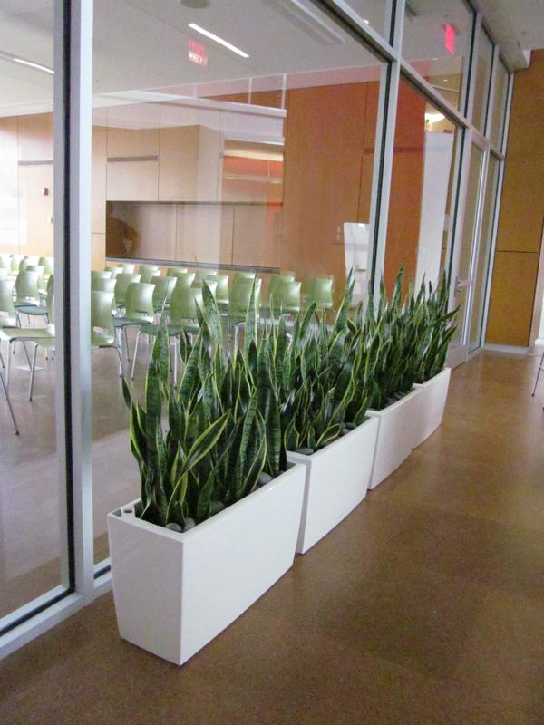 cararo planters.jpg