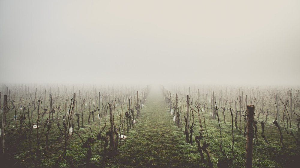 Theorize Vineyard