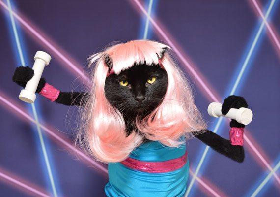 Cat Photographer Kate Funk Talks Costumes and Creativity