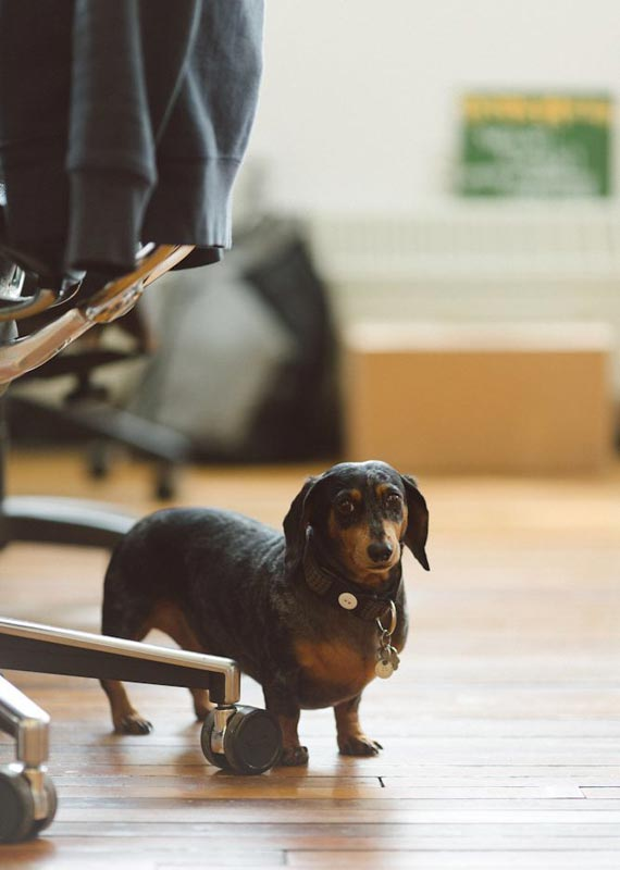 Company Culture: The Dogs of Etsy