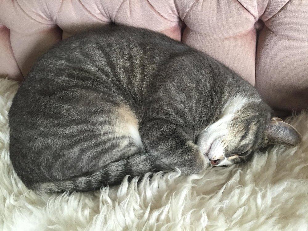 will bratt's cat ernie