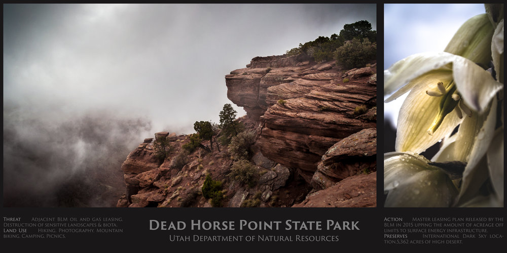 Dead Horse.jpg