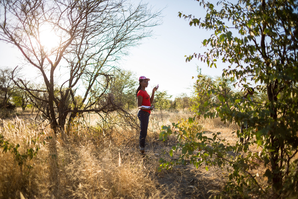YES participant Helvi Nghitaleko searches for various tree and plant species in the field.