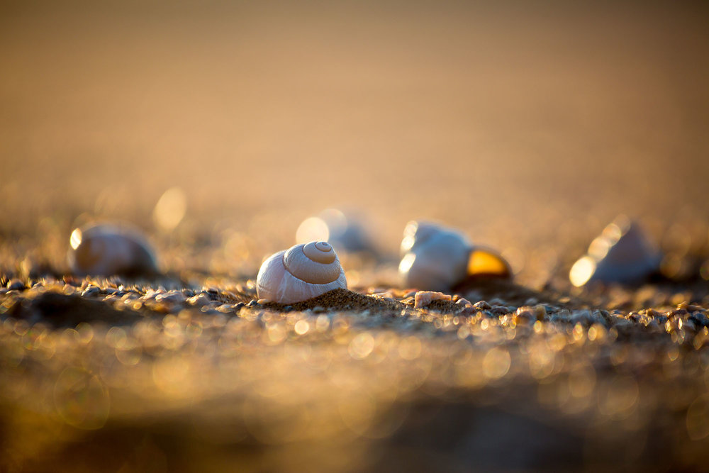 Empty shells found in the Namib Desert.