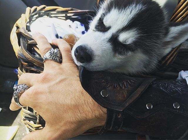 That #puppy pillow goes hard. Nothing like #armor that protects you and also serves as a good hard pillow for a #champion #husky .. #studio #travel #bff #steampunk #dog #AirshipEnoch #ring #gauntlet