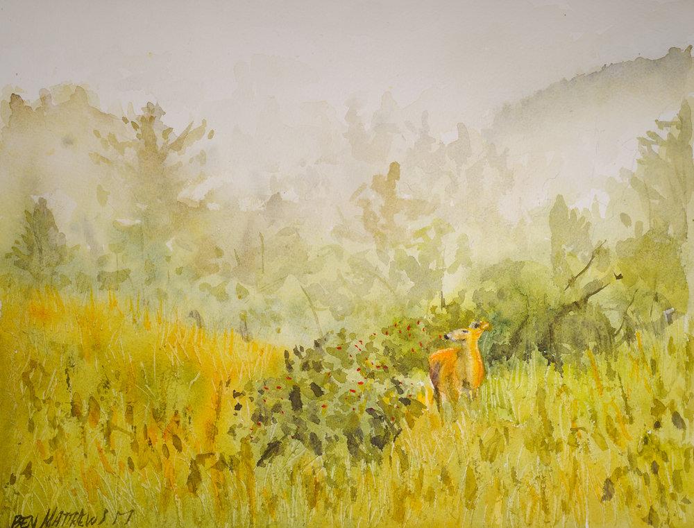 Deer in fog, Adirondacks