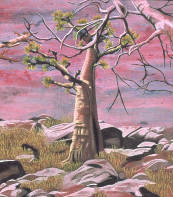 baobab-forest-detail 4.jpg