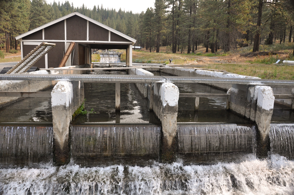 McFarland Springs Trout Farm in Susanville, California. Photography by Julie Ann Fineman.