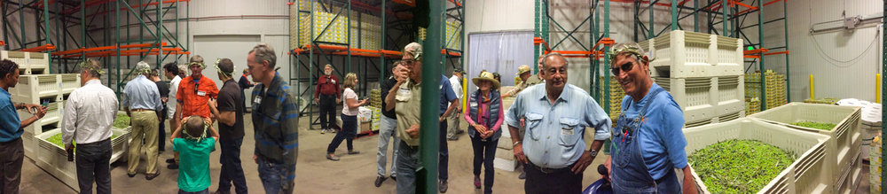 Touring the plant during the 2016 Olive Festival