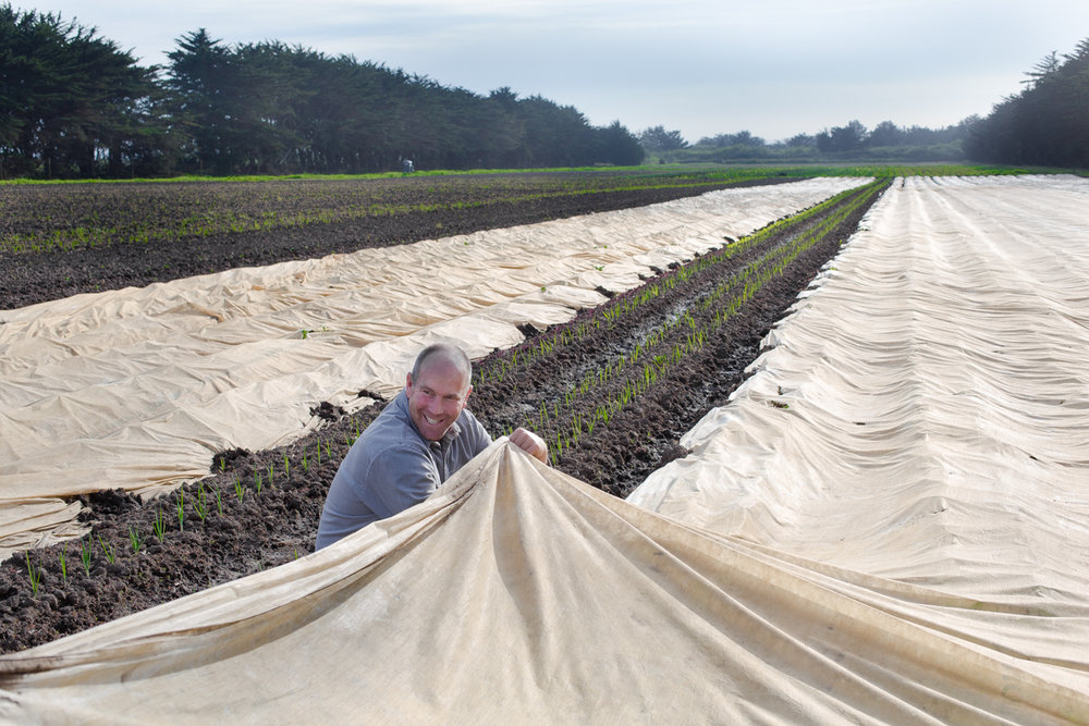 Reams of cover cloth protect vulnerable seedlings from frost and pests.... and keeps the warmth of the soil overnight                                                                        photo: Julie Fineman