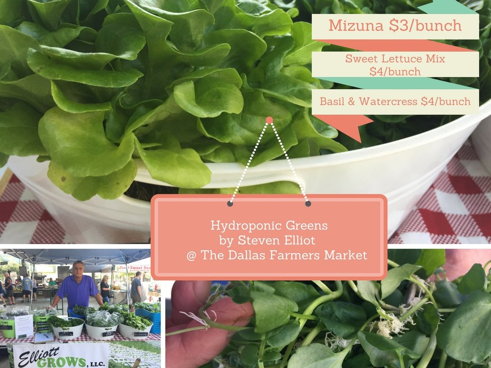 HYDROPONIC FARMER STEVE ELLIOT OF ELLLIOT GROWS, DENTON, TX, can also be found at the Coppell Farmers Market. Peak of harvest crops: Lettuces - Butterhead, Green Oakleaf, Red Oakleaf, Sweet Crisp, Arugula, Purslaine, Genovese Basil, Lemon Basil, Thai Basil