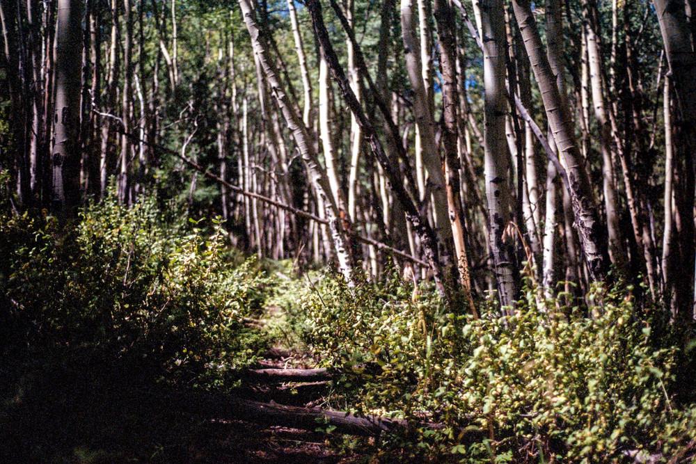 Forrest-1.jpg