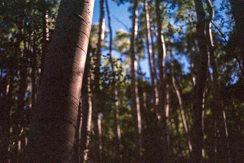 Forrest-3.jpg
