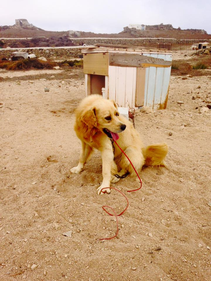 Dog 2 B.jpg
