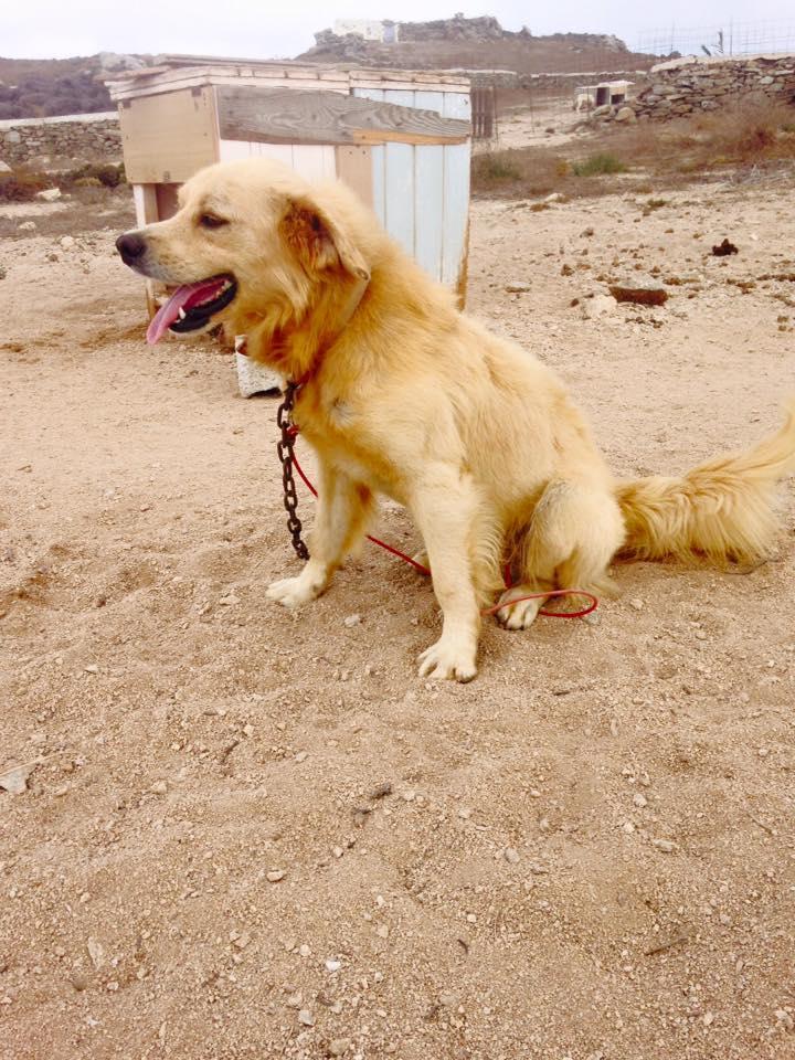 Dog 2 A.jpg
