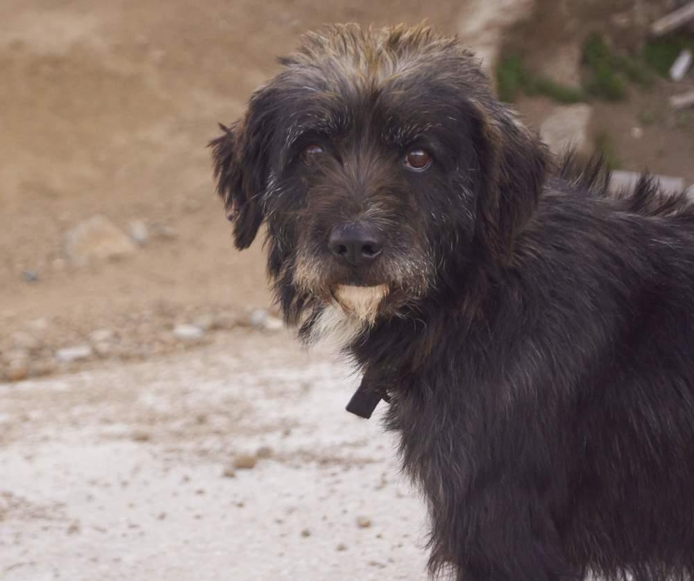 Simba - griffon mix | Mykonos dog rescue and adoption