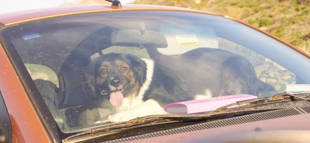 Brackie mix | Mykonos dog rescue and adoption