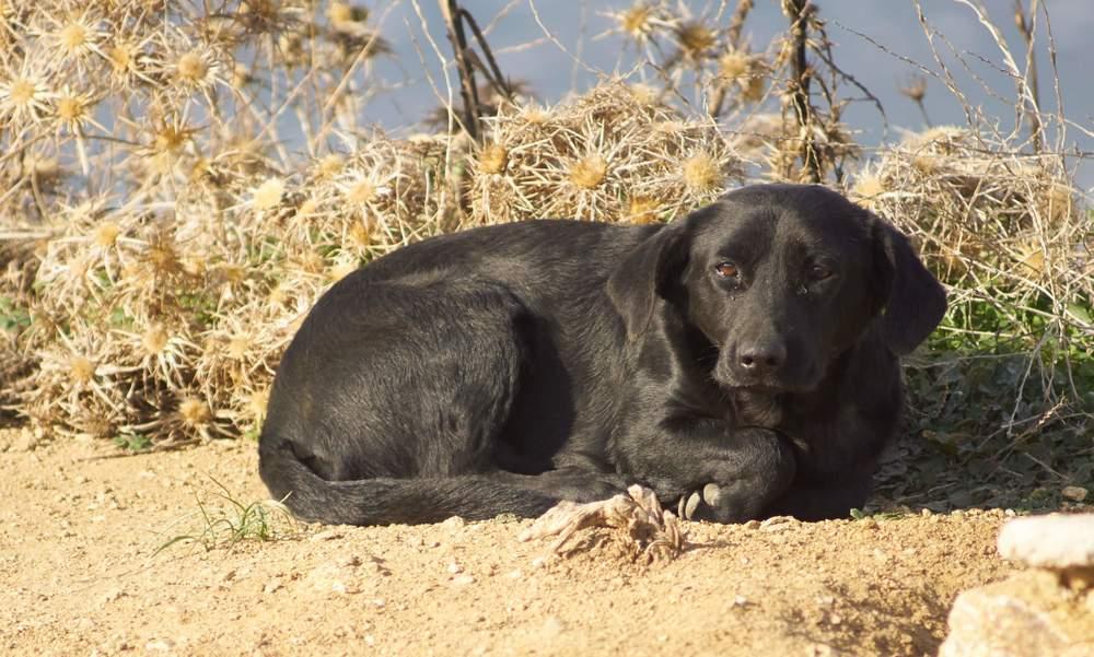 Koko Mix | Mykonos dog rescue and adoption | Maryam Horri | BrilliantSmile