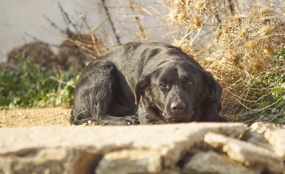 Bruno mix | Mykonos dog rescue and adoption | Sylvie Desneux Poulgouras