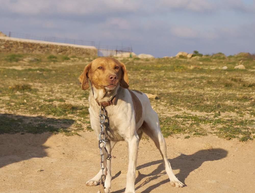 σκυλι με αλλη αλυσιδα1.jpg