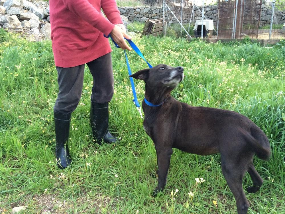 Sugar mix breed | Mykonos dog rescue and adoption