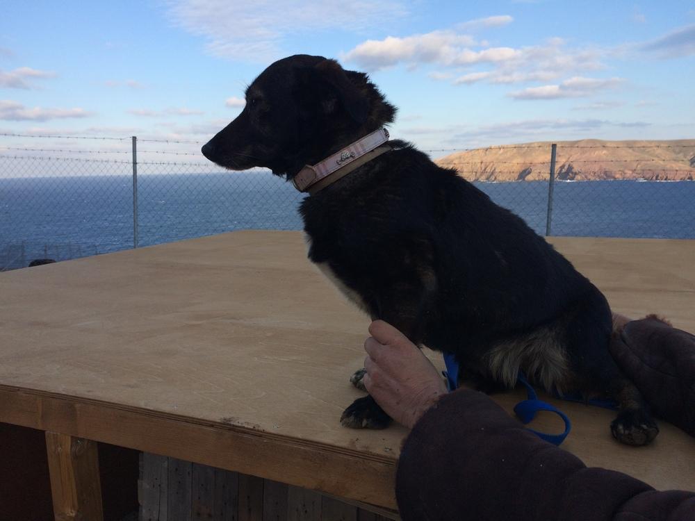 Lili mix | Mykonos dog rescue and adoption | Lina Toledo Kitsos | George Kitsos