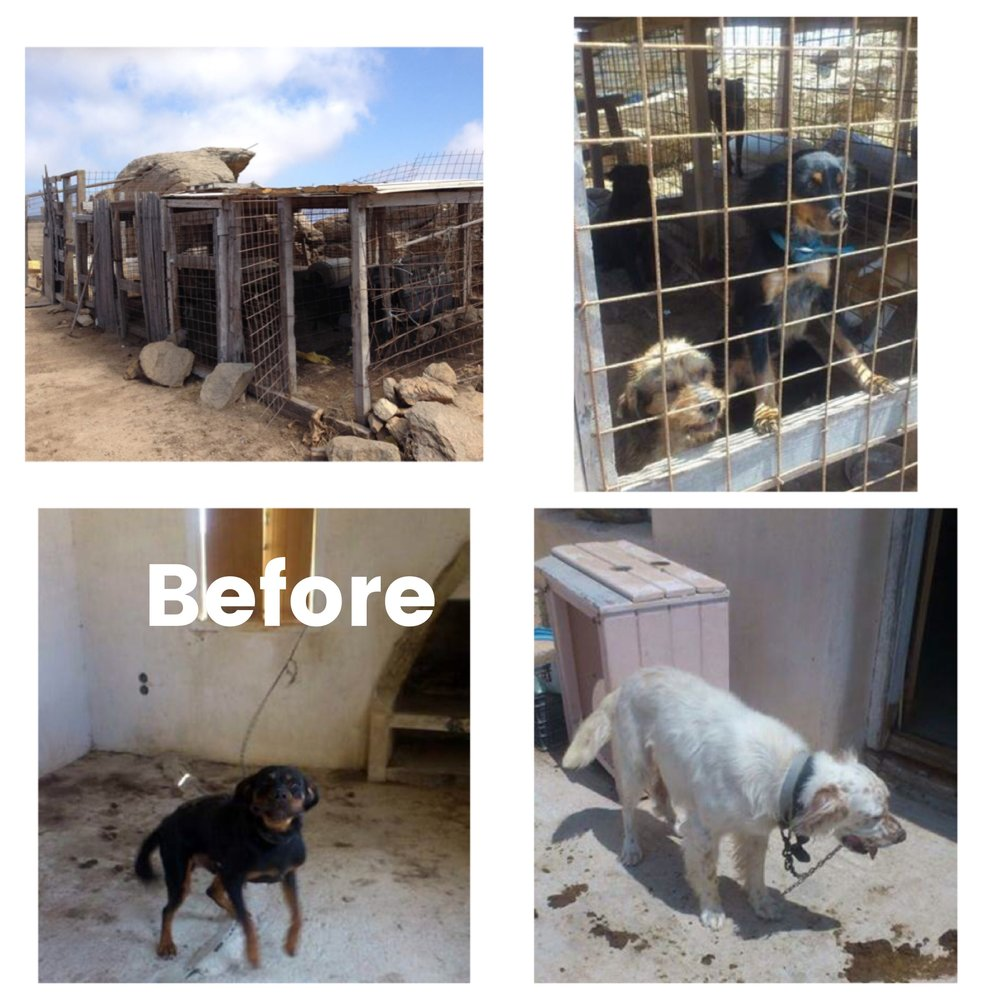 How did we start? - In late 2015, a concerned citizen made the future founders of Zero Stray Pawject aware of a stray dog makeshift shelter where dogs were kept under horrendous conditions, in some cases for years, in Mykonos, Greece. ...Abandoned dogs were held on three-foot chains for years without being able to escape their ordeal of being chained 24/7. Others were kept in small overcrowded kennels, with dogs biting and aggressing each other. Dogs even bit each other to death. The dogs did not receive proper medical care, many had open wounds, lived in their own feces, sometimes went without food and water for days, and in some cases did not even have shade during the hot summer months. Many dogs died over the years in that