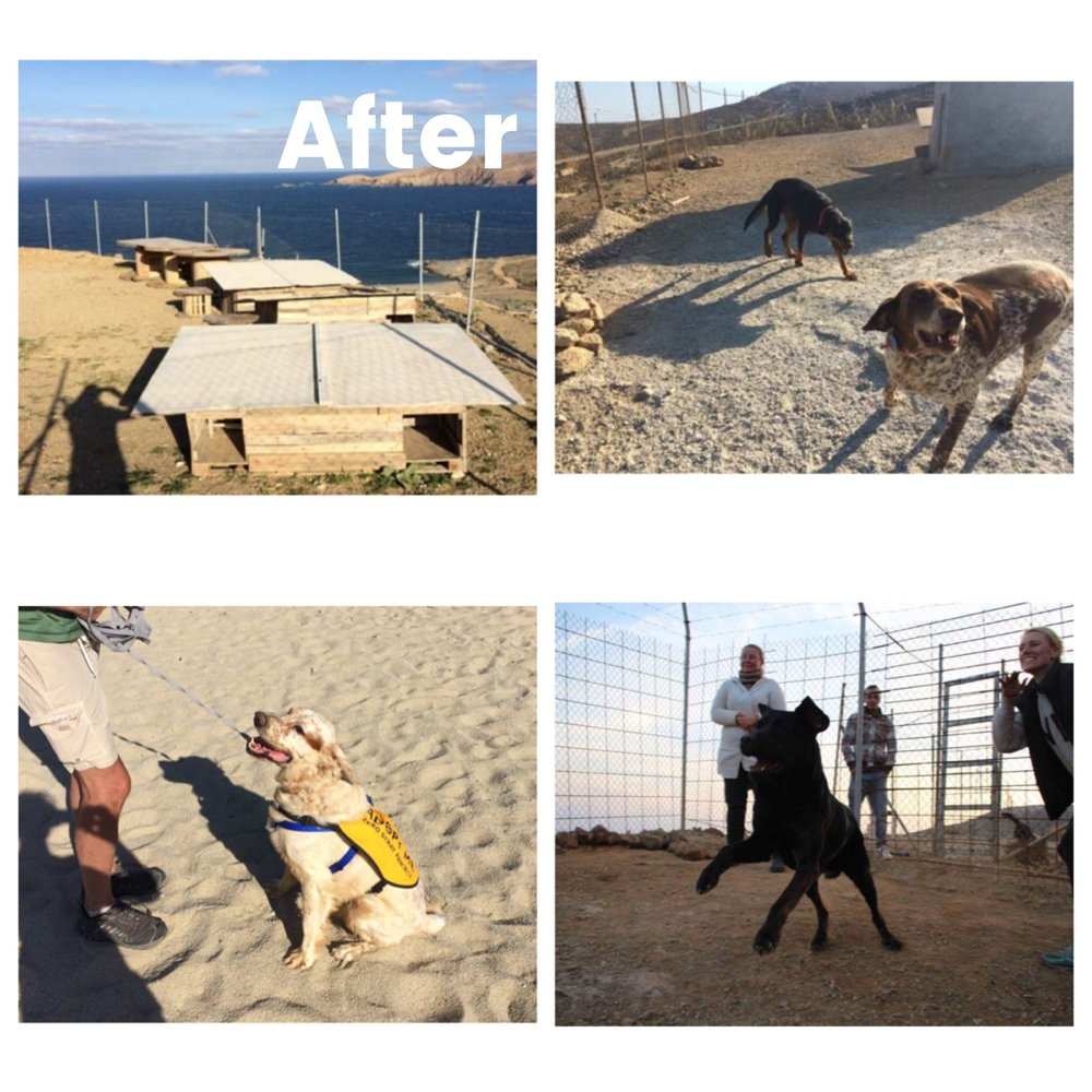 "What did we do? - The founders of Zero Stray Pawject were so appalled by those conditions and by the fact that nobody had effectively intervened for years. They could not just turn around and walk away.  So they took a decision which changed their lives forever: They partnered up with a local hotel owner and together built the first ever private dog rescue center in Mykonos with their own money… ... and saved 45 dogs who became protected by the ""Bill of Rights"" (regulating their well-being). Protection, that dogs in many other shelter don't enjoy.  For example, within a few months of our involvement, all dogs were kept in large living areas of at least 270 square feet/ 25m2, were not chained, and were paired with dogs of similar temperament, in small groups, so that the stress level was very low compared to other shelters. All dogs were vaccinated, neutered, and healthy, every dog had their medical records up to date, received food every day in the right quantity according to breed and size, had fresh water and was walked outside of the shelter (see ""Bill of Rights""). Due to the fact that dogs were kept under The ""Bill of Rights"" and lived with reduced stress levels, dogs were generally more easily adoptable compared to the average shelter dog. This status was achieved, well before the end of December 2016.Zero Stray Pawject has also helped to protect the community of Mykonos from the public health, public safety, and public image that could emerge if those 45 dogs were roaming the streets."