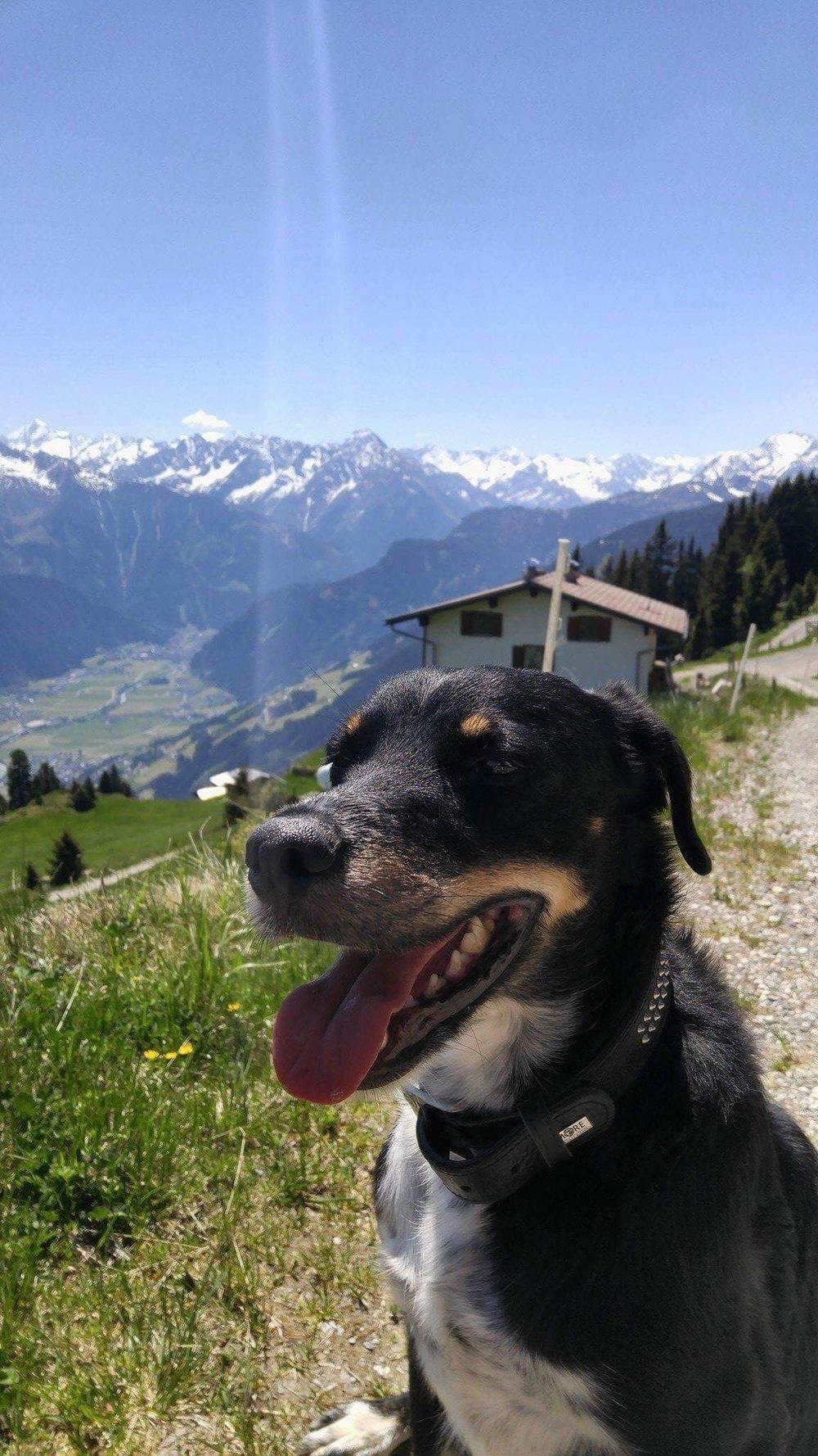 Theo im Zillertal May 2017 (2).JPG