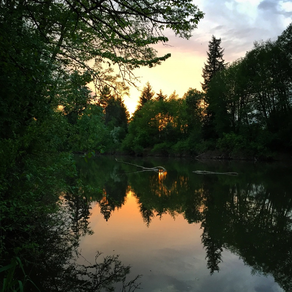 Gorgeous evening light on the Tualatin River.