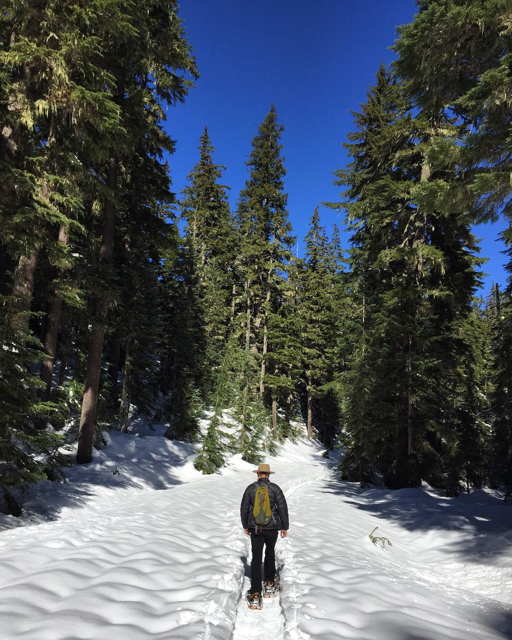We managed to get out and up to Mount Hood for a fun snowshoe trek on one of the few sunny days this winter.