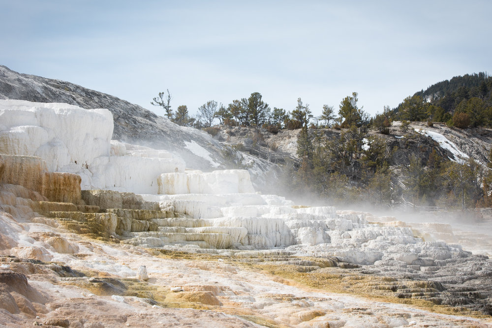 Mammoth Hot Springs were a study in neutrals (Bill)