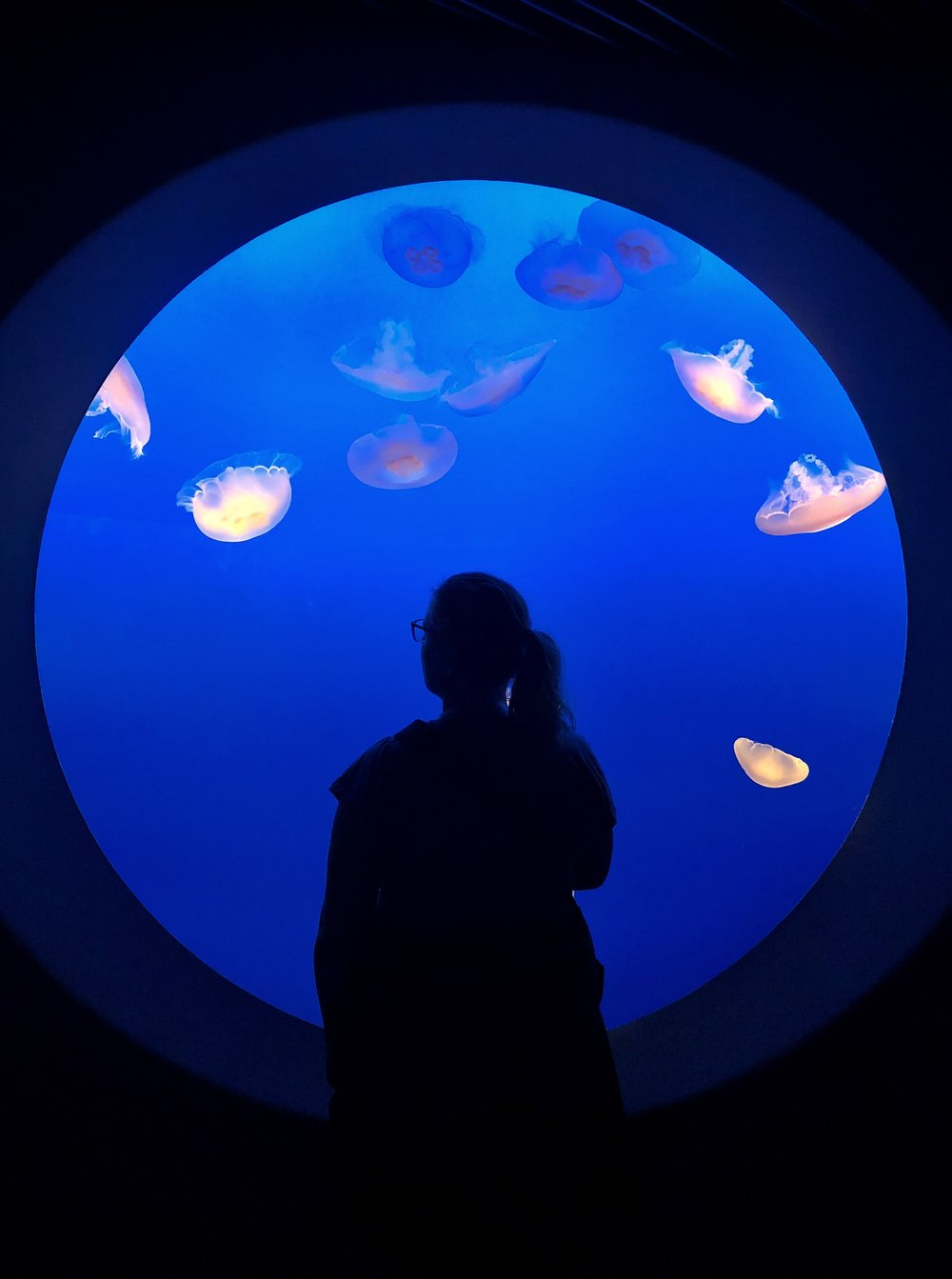 I was completely obsessed by the jellyfish at the Monterey Aquarium.