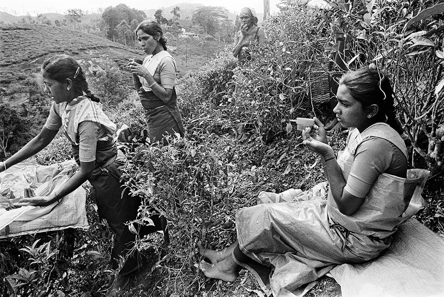 Tamils from India were brought to Sri Lanka by the British to work on tea plantations.  After Sri Lanka claimed its independence, most people from the Hill Tamil community were denied Sri Lankan citizenship.