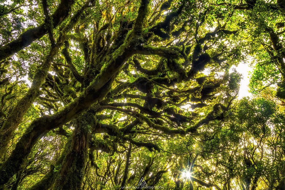 goblin_forest_taranaki_undersoul