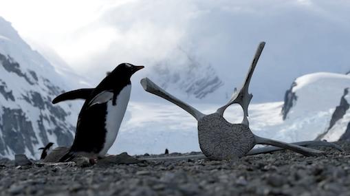 The Wandering Penguin