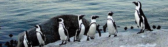 pen_penguin.jpg